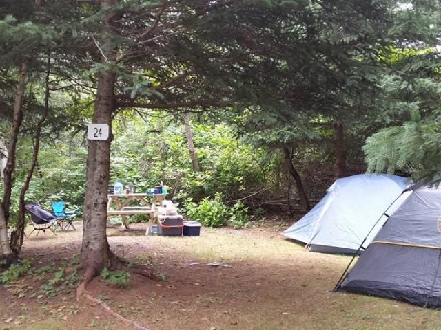 camping boisé isle aux coudres charlevoix fleuve